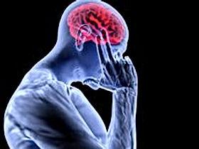 mozgi.jpg