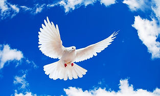 WEBSITE -- CALENDAR -- HOLY SPIRIT PHOTO 101.jpg