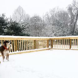 First snowfall of the season ❄️🐶❤️ #pap
