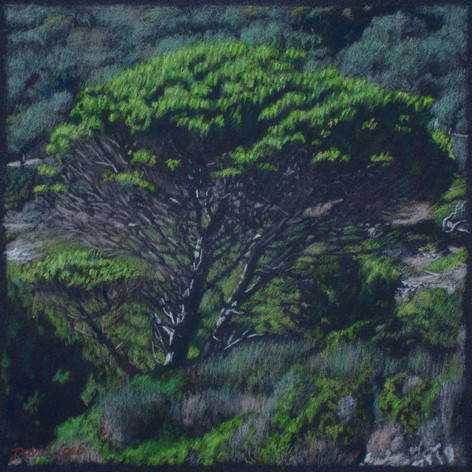 PAXOS PINE 2013, pastel 8×8 in / 20×20 cm