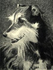 ROUSSEAU 2009, charcoal 34×26 in / 86×66 cm