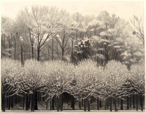 SNOW, FONTAINEBLEAU I 2015, charcoal 29×37 in / 74×93 cm