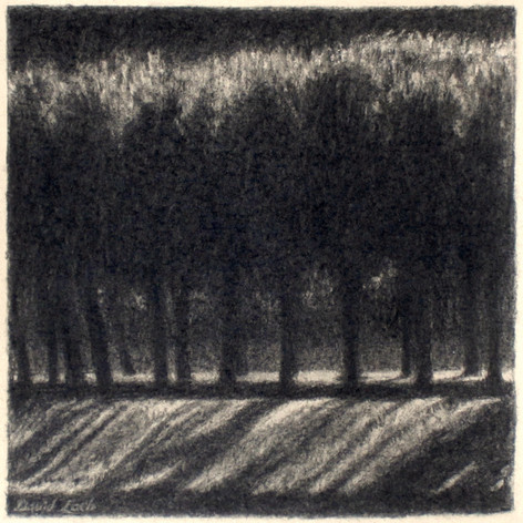 LINDEN TREES 2015, charcoal 8×8 in / 20×20 cm