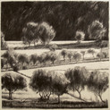ORCHARD 2015, charcoal 24×24 in / 60×60 cm