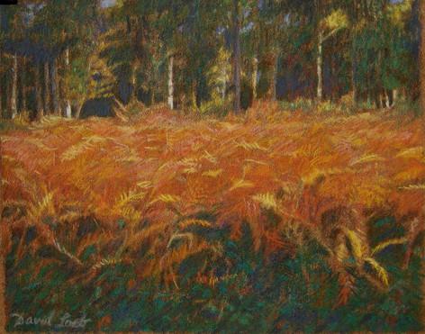 BARBEAU FERNS 2005, pastel 6×7½ in / 15×19 cm