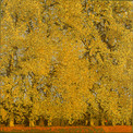 GOLDEN PLANE TREES 2018, oil on canvas 47×47 in / 120×120 cm