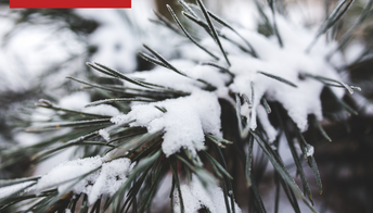 Introductory Seminar, How to Thrive in Winter with TCM
