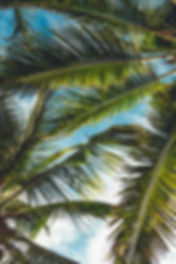 tropical-skincare-natural-beauty-detox-l
