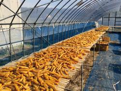 干し芋製造過程