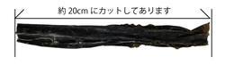 dashikon-2-2