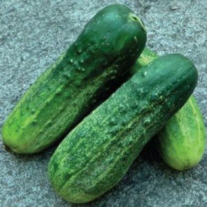 Calypso Cucumber (50 seeds)