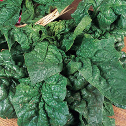 Giant Noble Spinach (+500 Seeds)