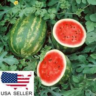 Congo Watermelon (35 seeds)