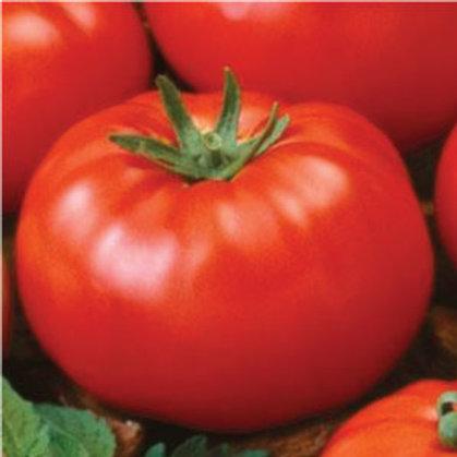 Ace 55 Tomato  (75 Seeds)