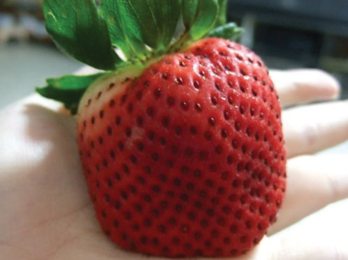 Giant Strawberry  (25 seeds)
