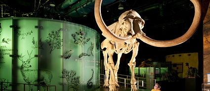 State-Museum-at-the-Springs-Preserve-PR-