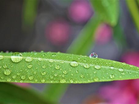 Summers Day Rain