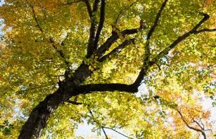 Tree of Summer.