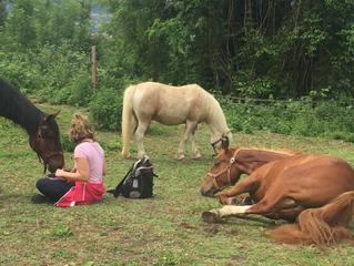 A la rencontre des chevaux...de soi