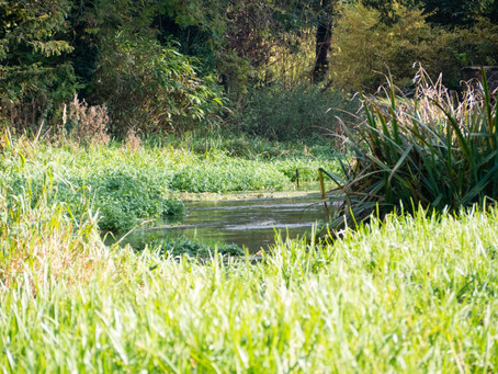 River Lambourn restoration