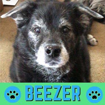 Beezer Profile Pic (2).png