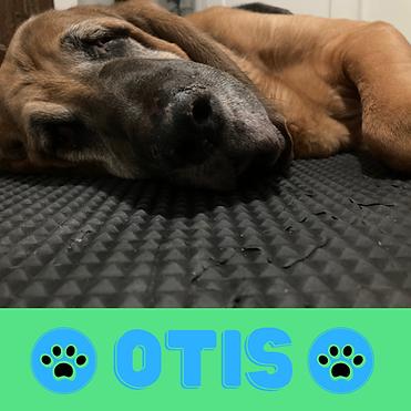 IG OTIS Profile Pic no frame (1).png