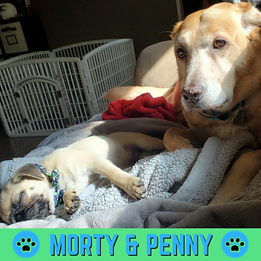 Morty n Penny Profile (1).png