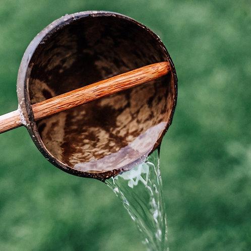 Coconut Water Spoon