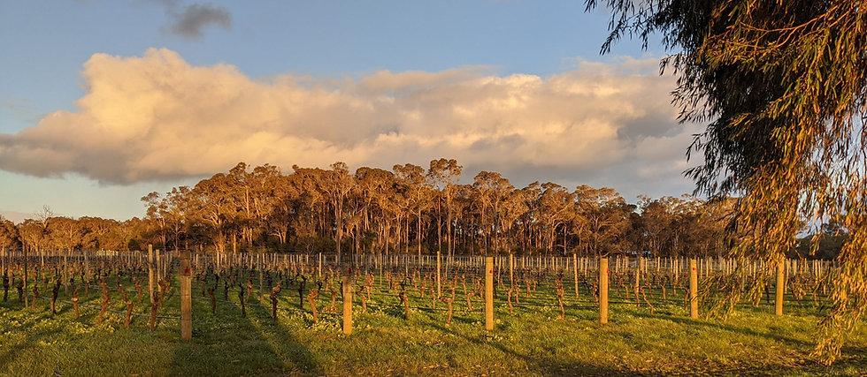 Cape Mentelle, Margaret River Region, Western Australia