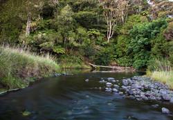 Essential Oils, aromatherapy, NZ