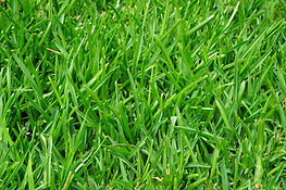 grass-375586.jpg