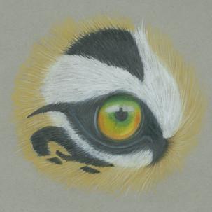 Tiger-Eye.jpg