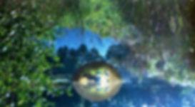 nature-974819_1920.jpg