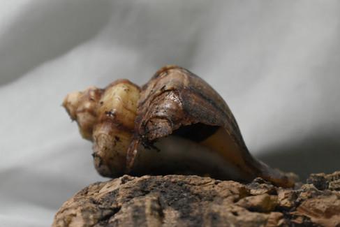 Hermit Crab #2: Muffins