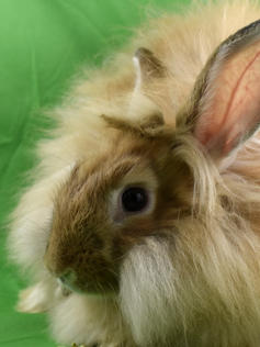 Young Bunny- Fluffle: #5B2