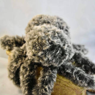 Fluffy Spider