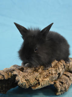 Young Bunny- Fluffle: #9B3