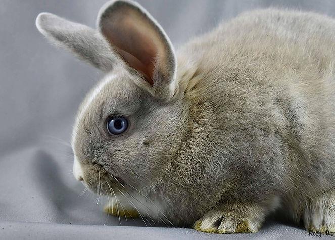 bunny eyes.jpg