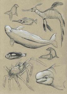 Aquarium Study 3
