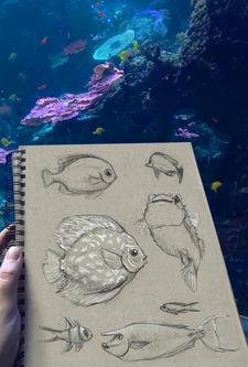 Aquarium Study 2
