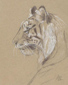 Tiger_Sketch.JPG