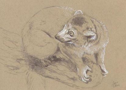LemurSketch.JPG