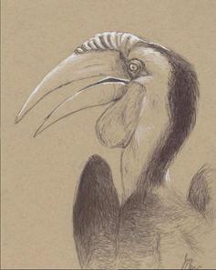 Hornbill_Sketch.JPG