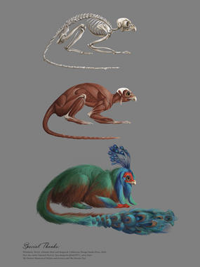 Creature Anatomy