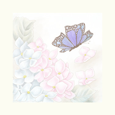 butterfly template for photobox sq canva
