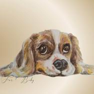 spaniel puppy pjg.jpg