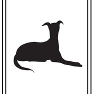 greyhound stitting JPG.jpg