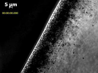 Magnetococci Bacteria