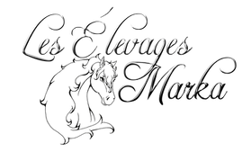Logo-Silver-Black (2).png