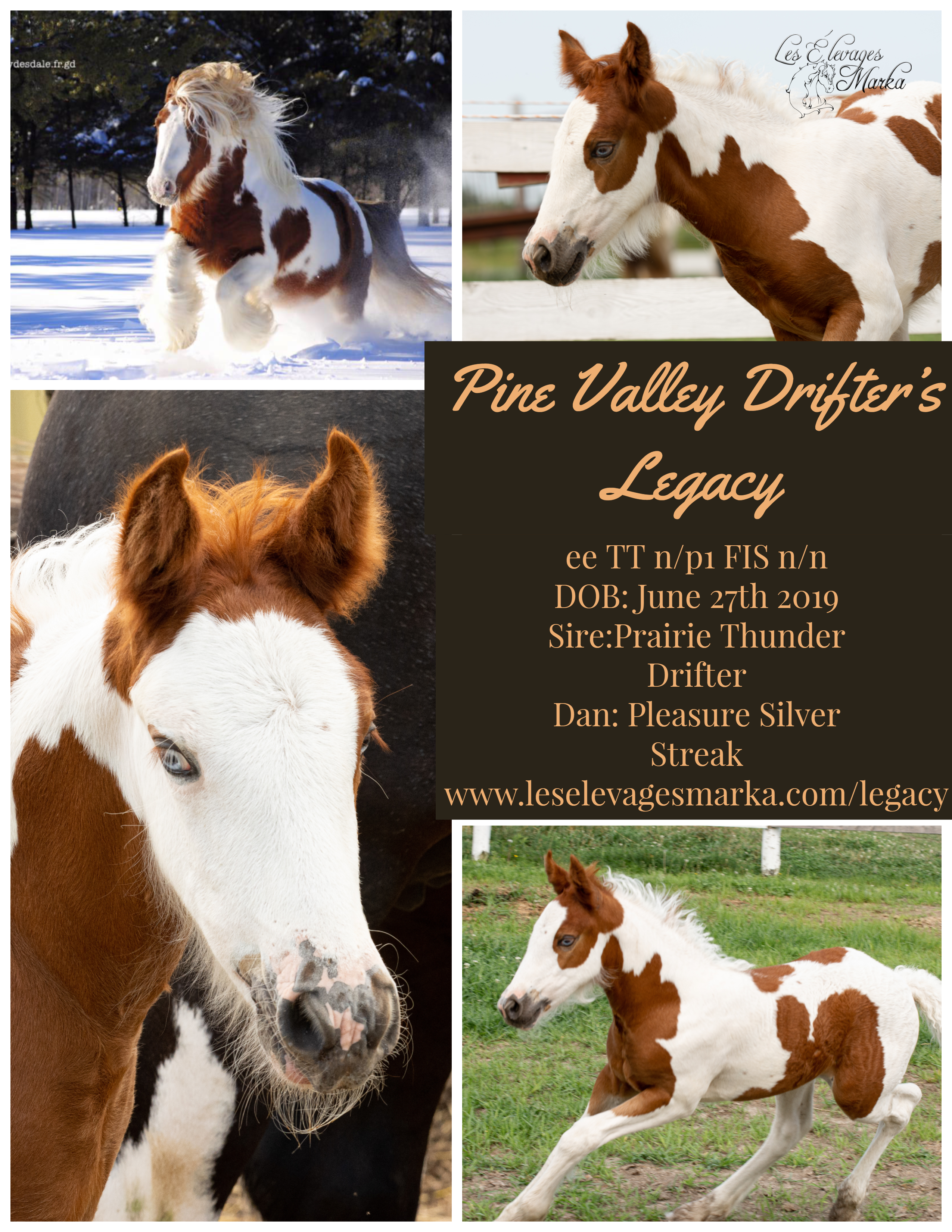 Pine Valley Drifter's Legacy